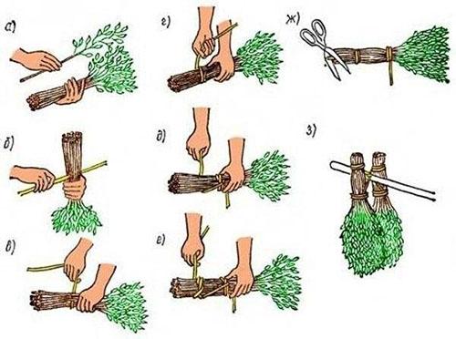 правильная заготовка банного березового веника